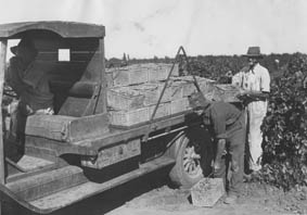 Loading a truck with grapes, c. 1930