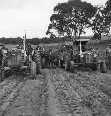 Potato harvester field day, Adelaide Hills 1959