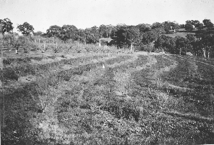 Blackwood Experimental Orchard