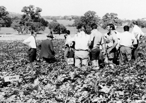 Potato variety field day at Woodside 1973