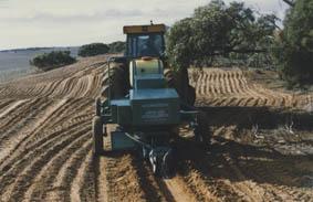 Direct seeding of salt bush in order to prevent erosion