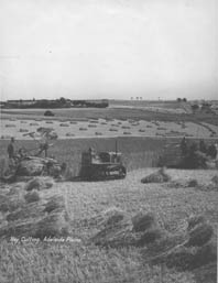 Hay cutting with binders on the Adelaide Plains, c.1940.
