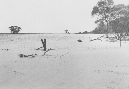 Barron, sandy area of land with a few trees and a barbed wire fence across the middle.
