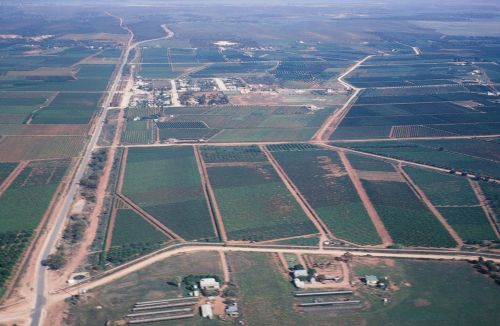 Irrigation in the Berri Irrigation District, circa 1980. Areas of salinized land due to shallow watertables can be seen in the centre of the photograph
