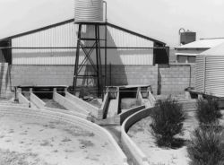 Figure 10, Photo 104917, Effluent drains outside intensive pig shed, used for transferring wastes to outside ponds.